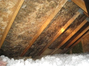 signs of attic mold